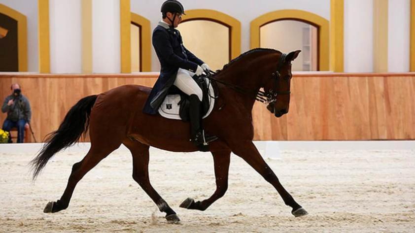 Lima 2019: equitador chileno dio positivo en antidoping y queda fuera de los Panamericanos